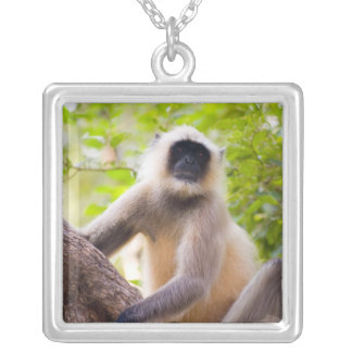 Monkey in jungle of Ranthambore National Park Silver Plated Necklace
