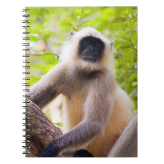 Monkey in jungle of Ranthambore National Park Spiral Notebook