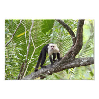 Monkey in the Jungle Photo Print