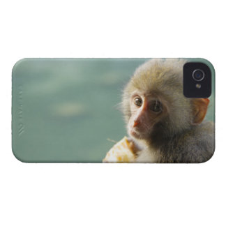 Monkey iPhone 4 Cover