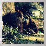 Monkey Love Print