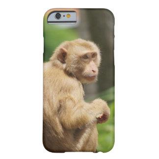 monkey monkey barely there iPhone 6 case