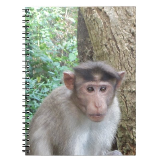 Monkey Notebooks