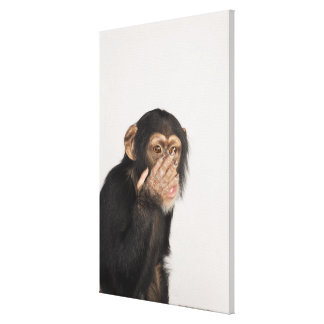 Monkey rubbing its face canvas print