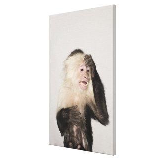 Monkey scratching itself canvas print