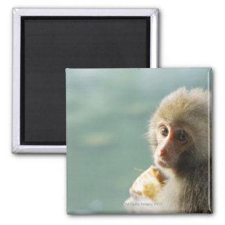 Monkey Square Magnet