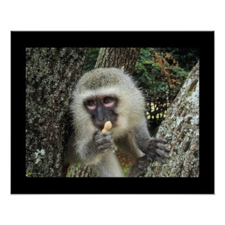 Monkey Tree Animal Christmas Contemporary Modern Print