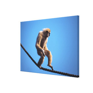 monkey walking on rope canvas print