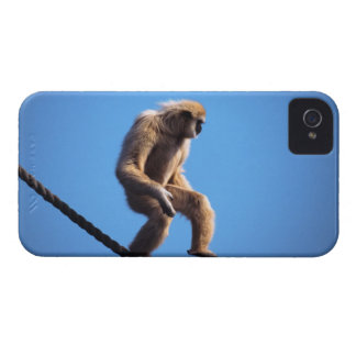 monkey walking on rope Case-Mate iPhone 4 cases