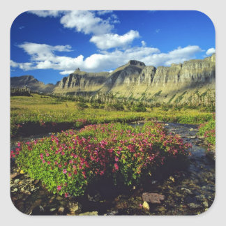 Monkeyflowers at Logan Pass in Glacier National Square Sticker
