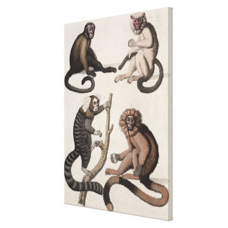 Monkeys (colour litho) canvas print