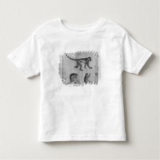 Monkeys, from The Vallardi Album Toddler T-Shirt