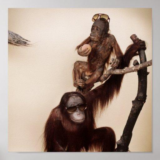 Monkeys in a tree poster