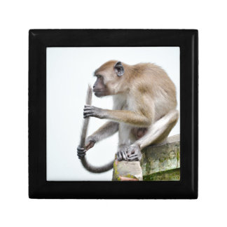monkeys in the jungle gift box