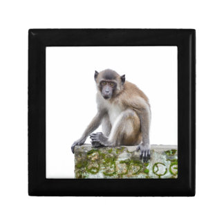 monkeys in the jungle small square gift box