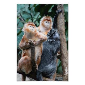 Monkeys Art Photo