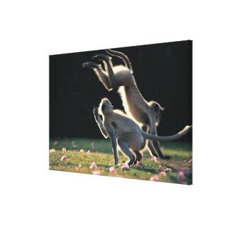 Monkeys playing canvas print