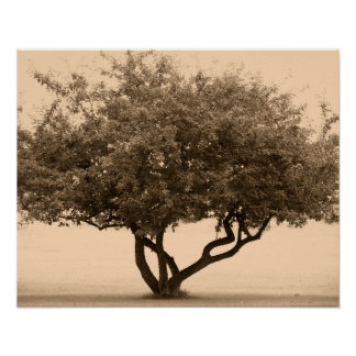 Monochromatic photo art-Lone Crab Tree Poster