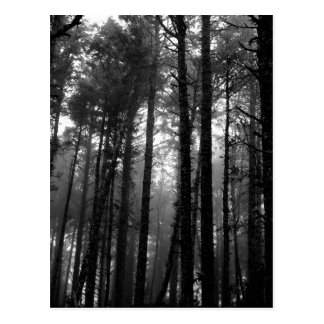 Monochrome Mist Among the Trees Postcard