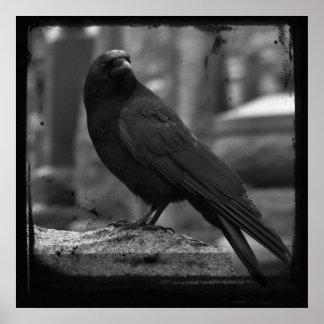 Monochrome Raven Poster