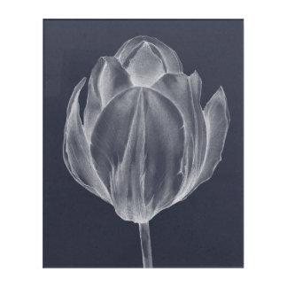 Monochrome Tulip I Acrylic Print