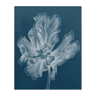 Monochrome Tulip II Acrylic Print