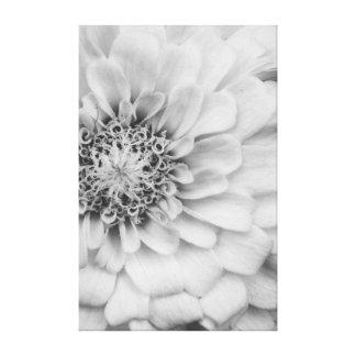 Monochrome Zinnia Flower Canvas Canvas Print