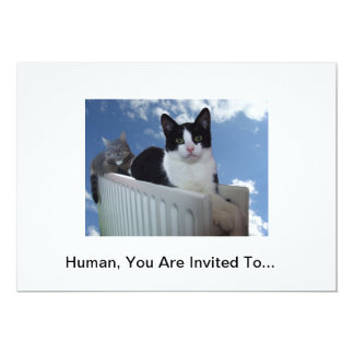 Monorail Cat Invitation