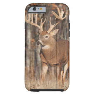Monster Whitetail Deer, Buck Tough iPhone 6 Case