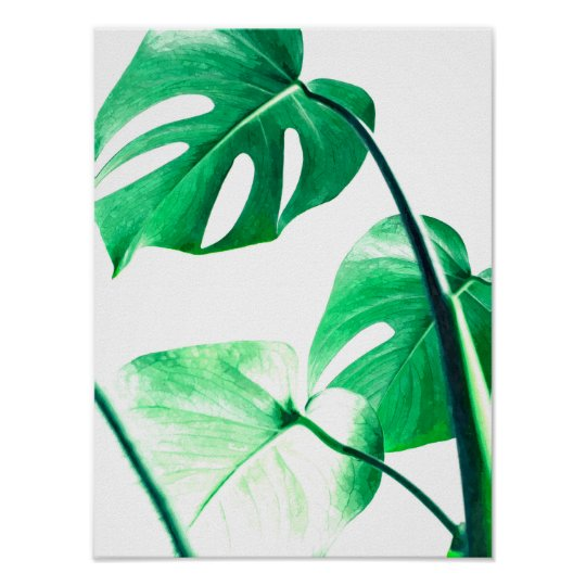 Monstera palm leaves tropical modern watercolor poster