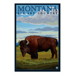 Montana - Bison Poster