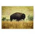 Montana Buffalo Card