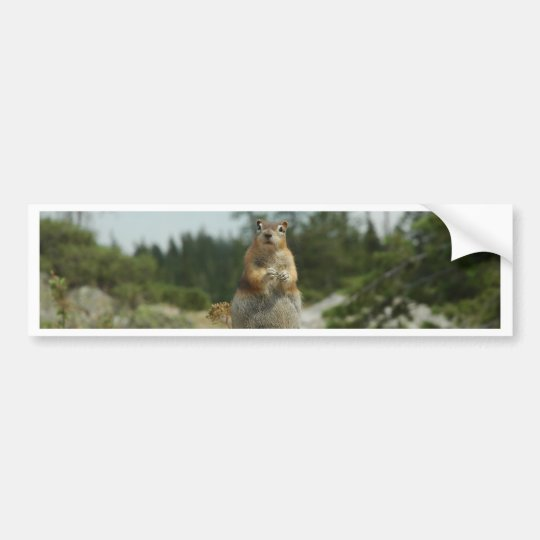 Montana Chipmunk Bumper Sticker