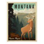 Montana Deer | Majestic, Magical Postcard