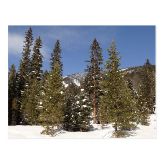 Montana Mountain Trails in Winter Landscape Photo Postcard