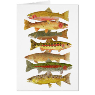 Montana Trout Greetings Card