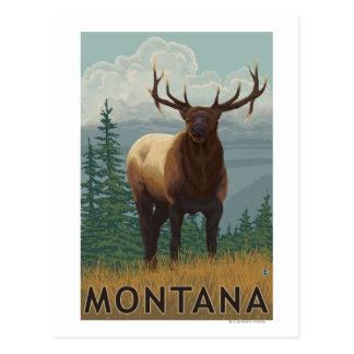 MontanaElk Scene Postcard