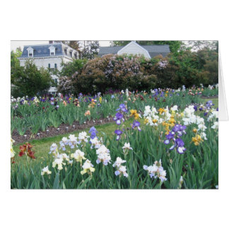 Montclair Irises Card