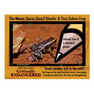 Monte Iberia Eleuth - an endangered rain frog -~~ Postcard