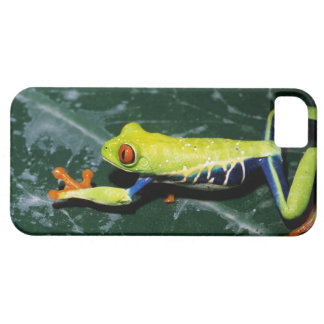 Monte Verde, Costa Rica. Red-eyed tree frog Barely There iPhone 5 Case