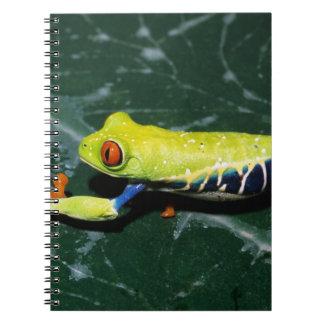 Monte Verde, Costa Rica. Red-eyed tree frog Notebook