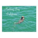 Monterey Bay Sea Otter Postcard