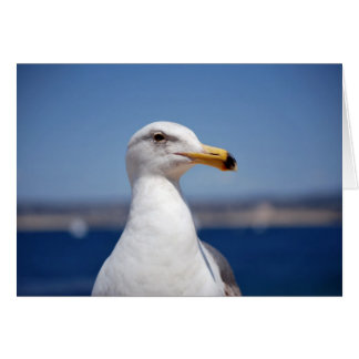 Monterey Bay Seagull Cards