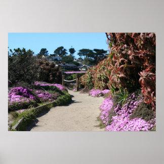Monterey Beach trail, Spring Photo Poster