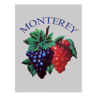 Monterey California Grapes Postcard