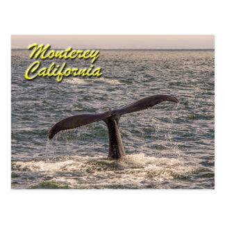 Monterey California Humpback Whale Postcard