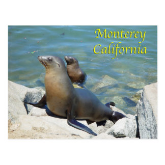 Monterey California Postcard