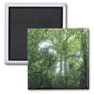 Monteverde Cloud Forest, Costa Rica. Magnet
