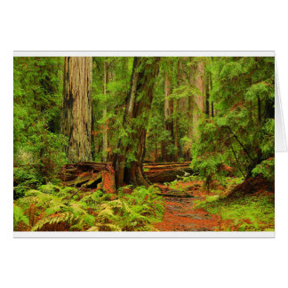 Montgomery Woods Card