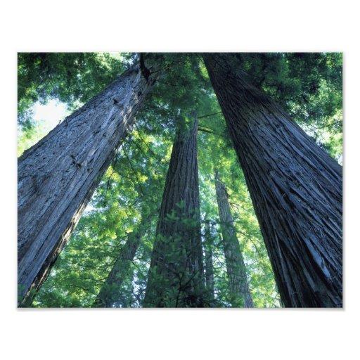 Montgomery Woods State Reserve, California. Photo Art
